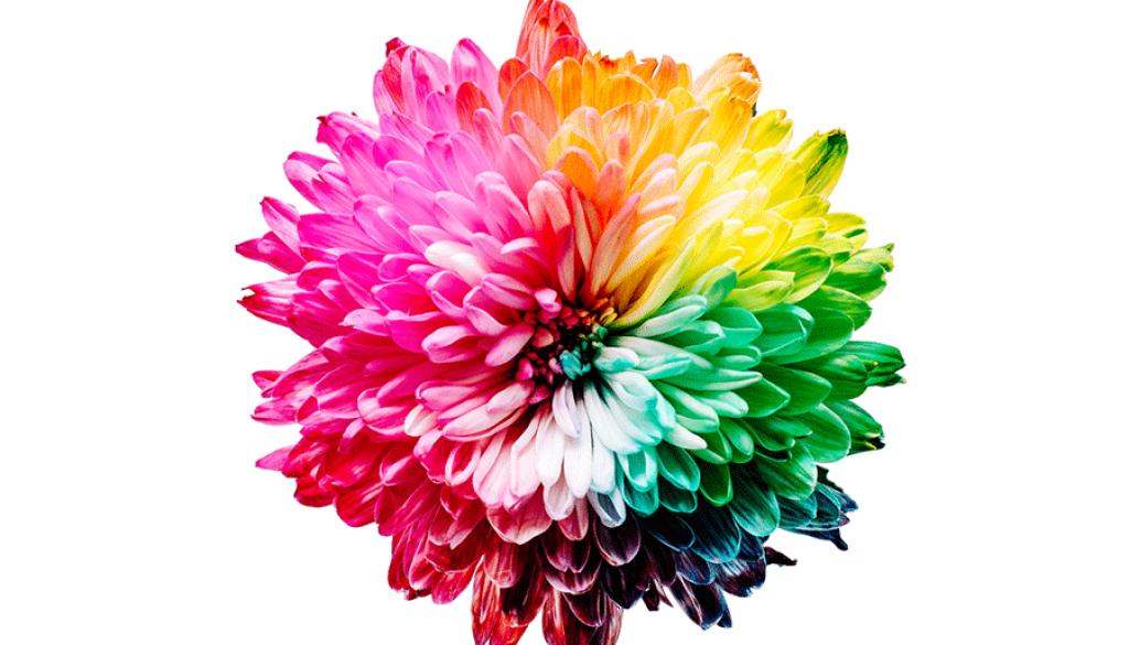 exploring the pantone color palette rainbow colored flower