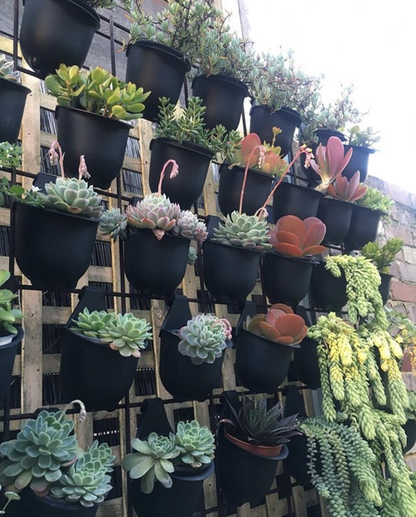 vertical wall of succulents