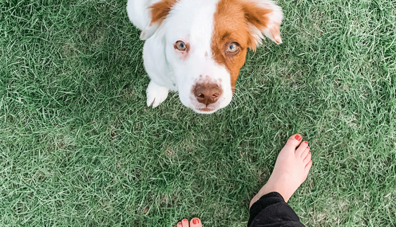 fostering a puppy through chicagoland dog rescue