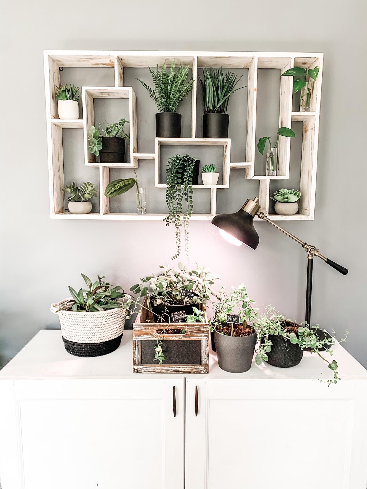 my indoor vertical garden with herbs and plants