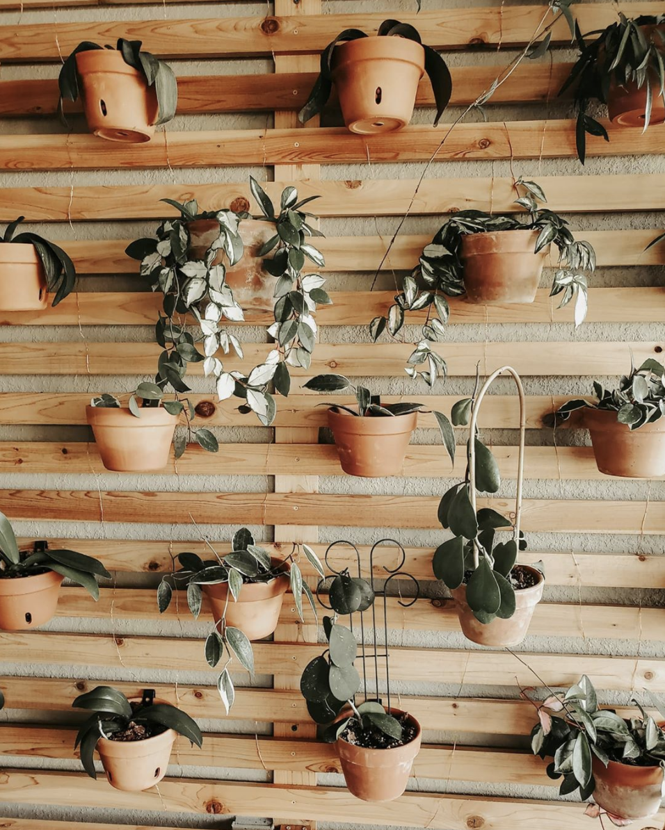 plant wall of pots on pallets