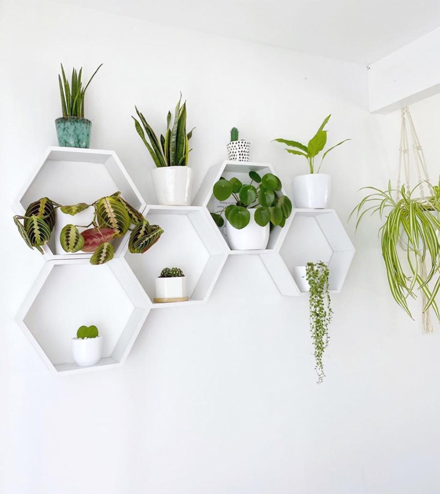 white hexagon shelves for plants