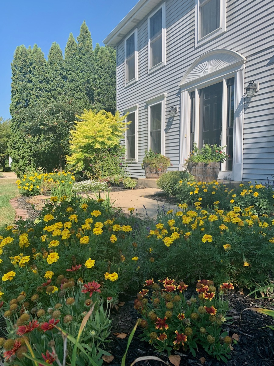 front landscape with tons of yellow marigolds