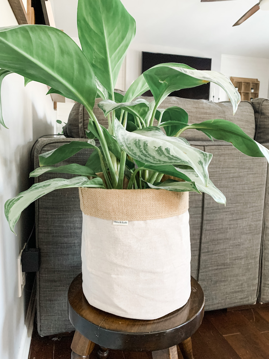 jute basket with aglanoema plant inside