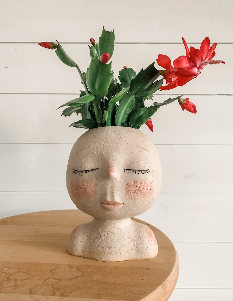 south facing window location for blooming christmas cactus