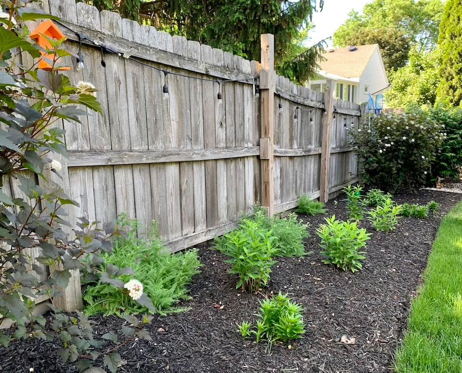 garden along fence line in backyard makeover